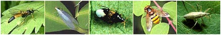 picture of predatory insects, list follows in h t m l