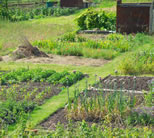 photo of backyard garden; click to see animation/video